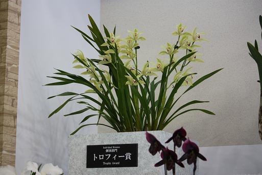 らん展1-14.JPG