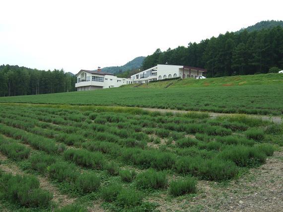 富良野1.JPG