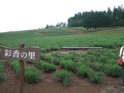 富良野22.JPG