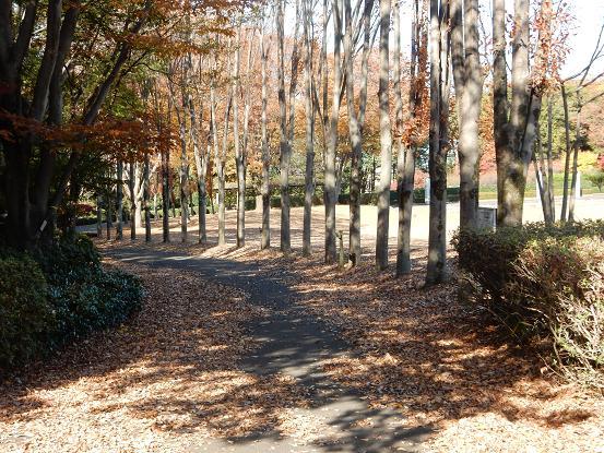 散歩2-1.JPG