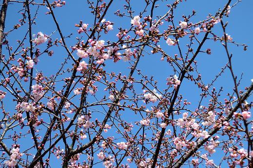 春2-1.JPG