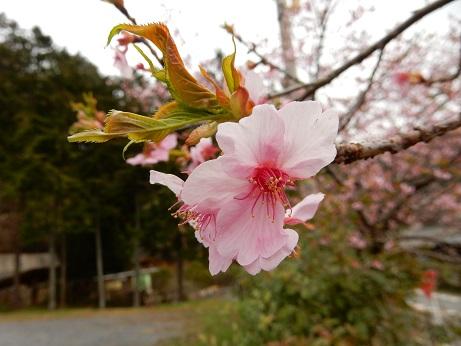 春2-3.jpg