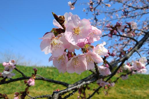 春2-7.JPG