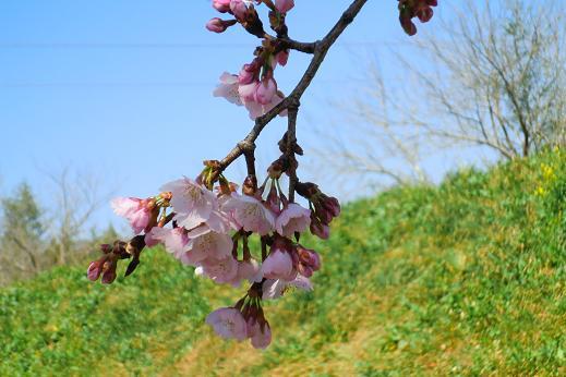春2-8.JPG