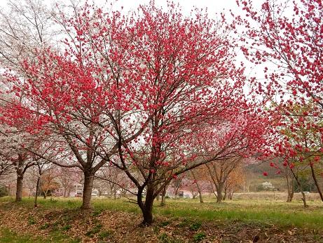 春3-9.jpg
