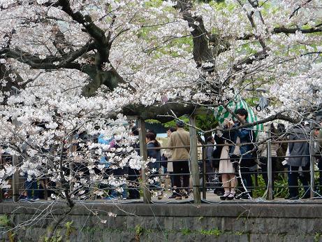 桜1-14.JPG