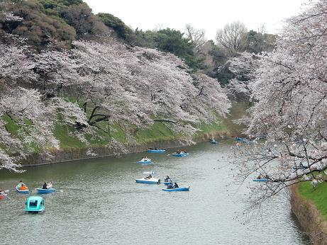 桜1-4.JPG