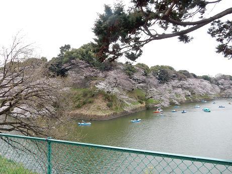 桜1-5.JPG