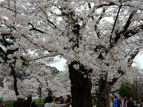 桜1-8.JPG