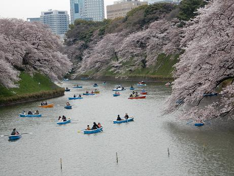 桜1-9.JPG