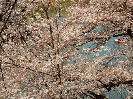 桜2-10.jpg