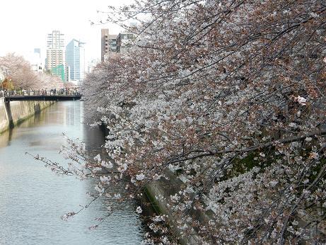 桜2-12.JPG