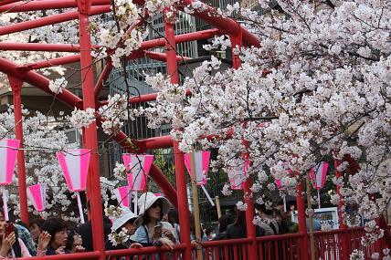 桜2-14.JPG
