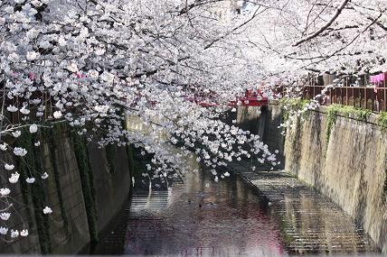 桜2-16.JPG