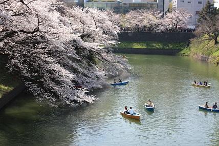桜2-2.jpg