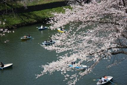 桜2-4.jpg