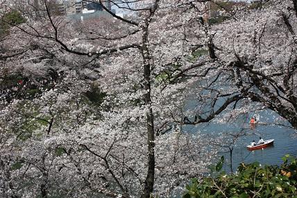 桜2-5.jpg