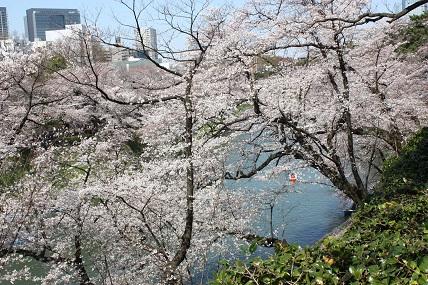 桜2-6.jpg