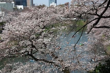 桜2-7.jpg