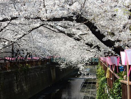 桜2-9.JPG