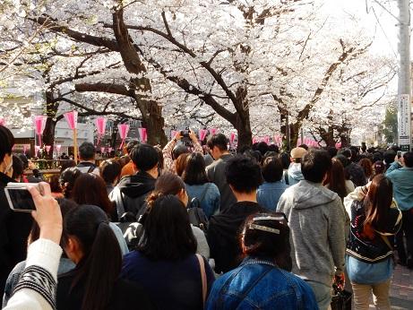 桜3-11.jpg