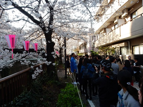 桜3-12.jpg