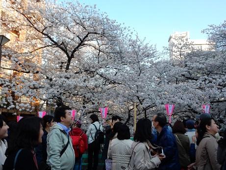 桜3-14.jpg