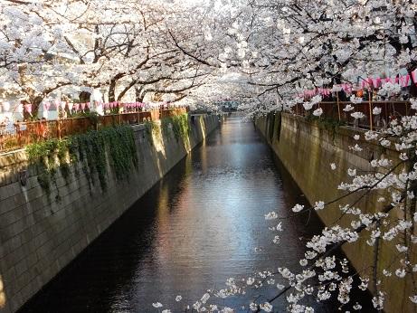 桜3-15.jpg