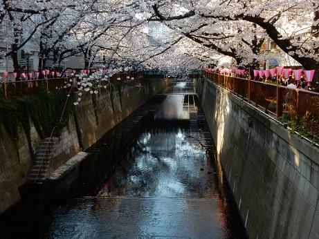 桜3-16.jpg