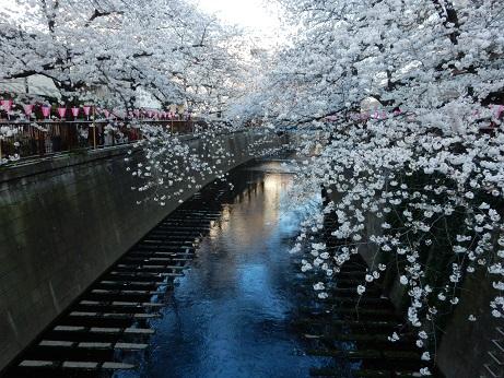 桜3-17.jpg