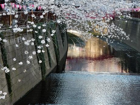 桜3-18.jpg