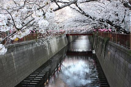 桜3-6.jpg