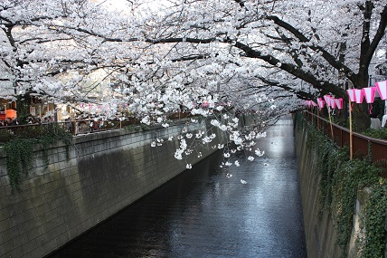 桜3-7.jpg