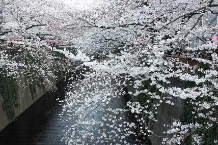 桜3-8.jpg