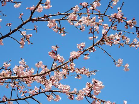 桜4-11.JPG
