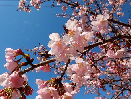 桜4-6.JPG