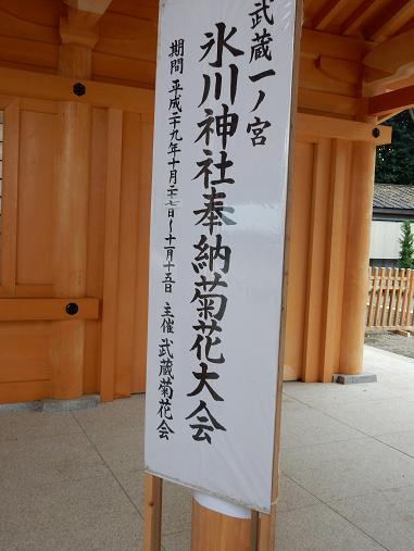 菊.JPG