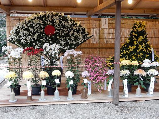 菊3-7.JPG