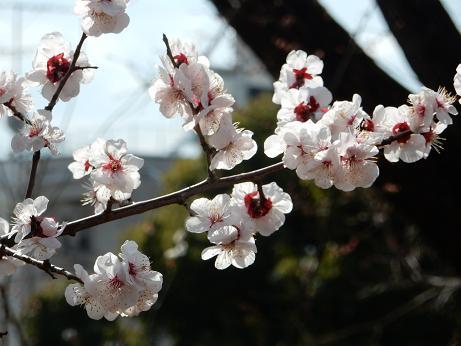 野の花1-1.JPG