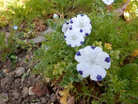 野の花1-15.JPG