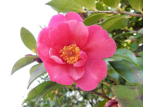 野の花1-16.JPG