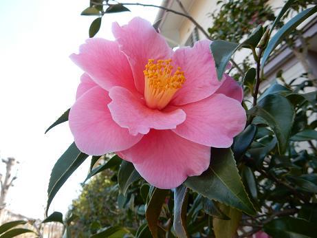 野の花1-6.JPG