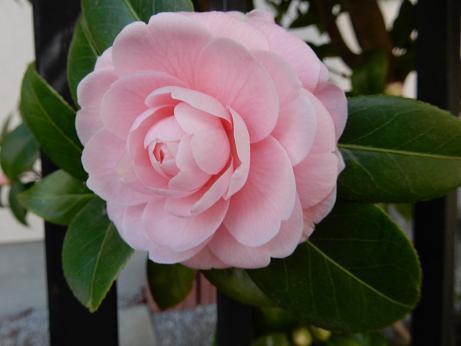 野の花1-7.JPG