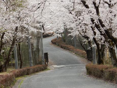 散歩道7-9.JPG