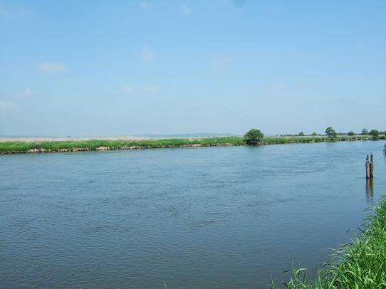 湿原1-5.JPG